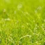 芝生の雑草が3ヶ月も生えないって本当? 除草剤シバキープⅡを使ってみた