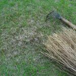 今年は芝生の手入れが大変!手作業によるサッチ取りは疲れます、もっと楽をしたい